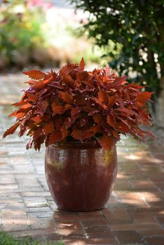 10 Container Gardening Ideas - Best Plants for Containers
