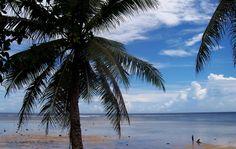 Coconut tree at Kosrae' beach