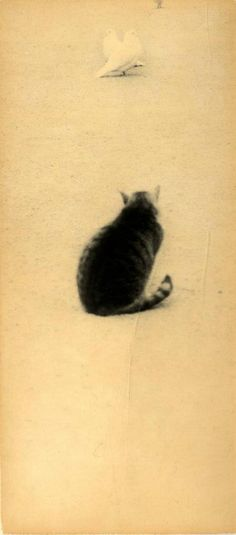 (c) Masao Yamamoto