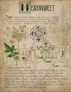 Magic Herbs, Plant Magic, Herbal Magic, Grimoire Book, Witch Herbs, Witchcraft For Beginners, Hedge Witch, Def Not, Modern Witch