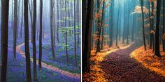 Magiczne ścieżki