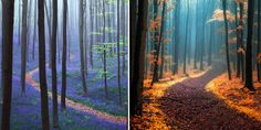 28 Magical Paths Begging To Be Walked