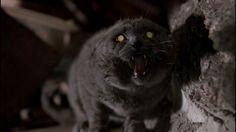 Apocalypse Meow: 10 Cats Guaranteed To Survive Doomsday | Petslady.com