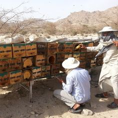 Horizontal log hives in Arabia: my colonies have doubled (from 5 colonies to 11) in 4 months. (honey bees forum at permies)