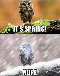 Get your laugh on to these 20 VERY Funny Spring Memes! Funny Owls, Funny Cute, Funny Animals, Cute Animals, Wild Animals, Memes Humor, Funny Memes, Funniest Memes, Math Memes