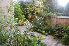 Carolien Barkman - Tuinen - Schaduwtuin