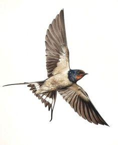 Swallow bird tattoo barns 17 ideas - Swallow bird tattoo barns 17 ideas Best Picture For flower tattoo For Your Taste Yo - Barn Swallow Tattoo, Swallow Tattoo Design, Swallow Bird Tattoos, Red Bird Tattoos, Tattoo Bird, Golondrinas Tattoo, Vogel Tattoo, Sparrow Tattoo, Celtic Tree Of Life