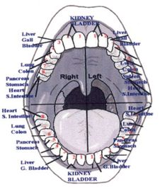 The tooth-organ connection. What do your #teeth say about your #health? #dentist #holistic
