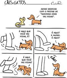 Cães e Gatos – Adivinha onde vai pisar