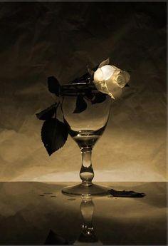 ♂ Still life glass rose