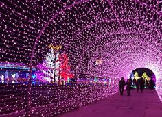 関西最大級のイルミネーションイベントが、冬の時期に神戸市北区のフルーツ・フラワーパークで行われます。2015~2016年の開催は、10月30日(金)~2016年1月31日(日)。まばゆいばかりの光の大群が、園内を彩っています。ひまわりやペンギン、サンタやトナカイなど、かわいいイルミネーションも多いので、カップルはもちろんご家族連れにもオススメのイベントです!
