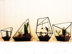 air plants in geometric terrariums