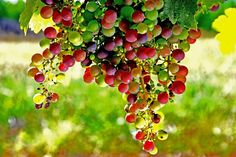 highlights on grapes by Minh Hoang-Cong, via 500px