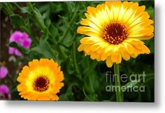 Sunny Day Metal Print By Chandra Nyleen