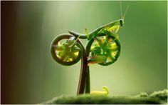 Una mantis andando en bicicleta!