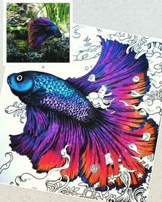 from #animorphia inspired by this #beautiful and #colourful Betta fish #adultcoloringbooks #kerbyrosanes
