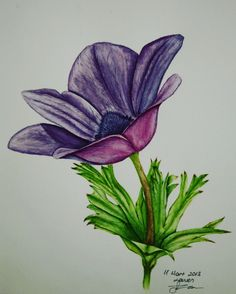 Anemone flower, watercolor on paper