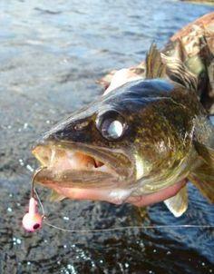 Walleye Fishing Ontario Canadian Shield Fly In Camp Walleye Fishing Tips, Bass Fishing Tips, Fishing Knots, Fishing Bait, Gone Fishing, Best Fishing, Trout Fishing, Saltwater Fishing, Fishing Tricks