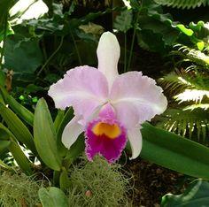 Plantas ideales para plantar en primavera: Las orquídeas