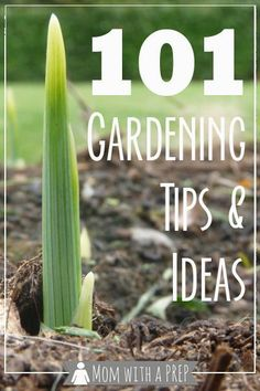 Mom with a PREP | 101+ Gardening Ideas & Tips - from planning to planting to growing to harvesting, ideas and tips for you to grow your own food and be more self-reliant: