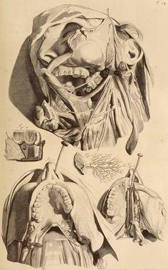 Ontleding des menschelyken lichaams by Govard Bidloo (Anatomist) and Gérard de Lairesse (Artist)