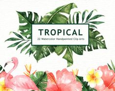 Tropical Leaves Watercolor Clipart Graphics The set of high quality hand painted watercolor tropical leaves and elements images in bright and fr by everysunsun Watercolor Plants, Watercolor Leaves, Watercolor And Ink, Flower Watercolor, Watercolor Design, Pencil Illustration, Graphic Illustration, Animal Illustrations, Design Illustrations
