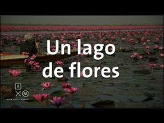 El espectacular lago de flores de loto   Tailandia #16