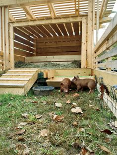 (Nicely ventilated) Rolling Pig Pen, by Moskow Linn Architects Pot Belly Pigs, Pig Pen, Future Farms, Pig Farming, Mini Pigs, Pet Pigs, Farms Living, Hobby Farms, Small Farm