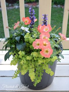 ) 2 white impatiens (filler) 2 coral petunias (filler-spiller) 2 creeping jenny (spiller) – this can be split up, so you don't need to buy 2 plants per planter! Diy Gardening, Container Gardening, Organic Gardening, Vegetable Gardening, Vegetable Planters, Tall Plants, Outdoor Plants, Potted Plants, Potted Flowers