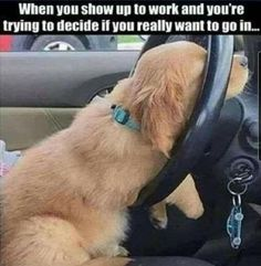 Work Memes, Work Humor, Dogs Of The World, Cute, Animals, Funny Stuff, Adventure, Funny Things, Animales
