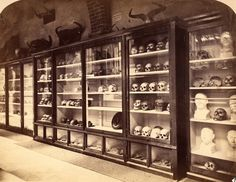 Pitt Rivers Collection: Crania displays in the Oxford University Museum before 1887 [Photograph courtesy of Zoological Collections, OUMNH]