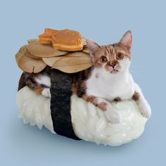 I love those rice cushions. My cats would shred them in seconds, but I still like them.  Sushi Cats combine cute felines and delicious sushi