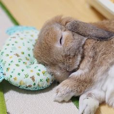 What a panda, not a bear. Well, what about my pillow. ☆ I love sleeping Baby Animals Super Cute, Cute Baby Bunnies, Pretty Animals, Cute Little Animals, Animals Beautiful, Baby Animals Pictures, Cute Animal Pictures, Funny Animals, Pet Bunny Rabbits