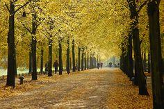 Promenade Münster October Münster ist immer dabei!