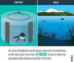 Here's another reason why not to go to Sea World: