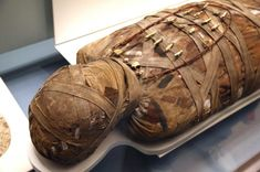 Several mummies complete with sarcophagi were retrieved from dirty water where they'd been found floating near El Minya, Egypt.According to a statement from the Egyptian Ministry of Antiquities, Ancient Egypt, Ancient History, Egypt Mummy, Guadalupe River, Discovery Museum, Egyptian Mummies, Family Vacation Spots, Glass Museum, Mystery