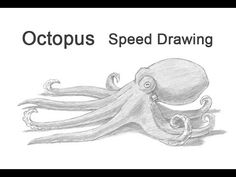 Discover the Internets Amazing Online Drawing Lessons Resource for all your drawing tutorial needs. Step by step instructions on drawing. Easy Octopus Drawing, Octopus Sketch, Octopus Painting, Octopus Art, How To Draw Octopus, Sea Creatures Drawing, Surfboard Painting, Drawn Fish, Cute Coloring Pages
