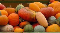 Comer os frutos da época: outono Brasil   Culinária - Donas de casa anônimas