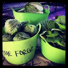 Winter greens at the Forge