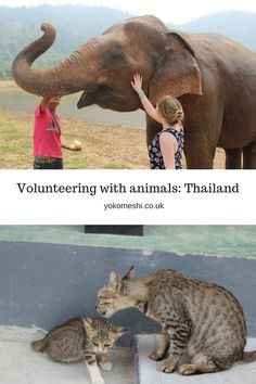 Volunteering with animals: Thailand  Part of a new series of posts based on responsible tourism with animals.  www.yokomeshi.co.uk