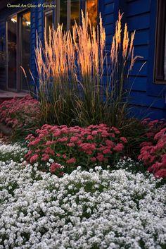Calamagrostis x acutiflora 'Karl Foerster' - Feather Reed Grass with Sedum 'Autumn Joy' & Lobularia 'Snow Princess'