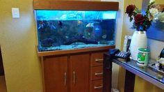 Lindo aquário de 200 L com móvel