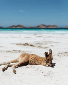 La plus belle plage du monde - Josie Loves - Beauty Black Pins Australia Visa, Perth Australia, Western Australia, Australia Travel, Great Barrier Reef, Places To Travel, Places To Go, Josie Loves, Road Trip