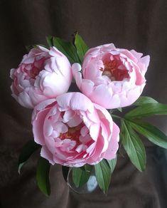 "beautys-grace: ""My favorite "" Piones Flowers, Peony Flower, Pretty Flowers, Flower Art, Planting Flowers, Peony Painting, Watercolor Flowers, Flower Images, Flower Photos"