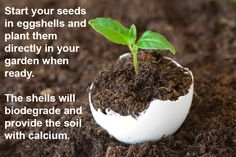 Gardening tips: Eggshells provide the soil with calcium.