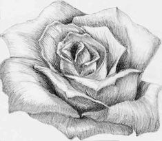 Dibujos de Flores - Art Lessons On Video Pencil Drawings Of Girls, Easy Drawings, Flower Drawings, Beautiful Rose Drawing, Sketch Style, Art Tumblr, Drawing People, Pencil Art, Art Sketches