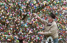 Volker Kraft decorates a tree with some Easter eggs at the garden of Christa & Volker Kraft, in Saalfeld, eastern Germany. The Kraft family have decorated their tree with Easter eggs for more than during the Easter time. Funny Easter Eggs, Hoppy Easter, Easter Bunny, Easter Egg Pictures, Egg Tree, Ideas Prácticas, Yard Ideas, Easter Tree, Easter Traditions