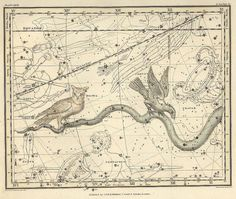Constellations of Hydra continued Corvus Noctua by mapsandposters, $11.88