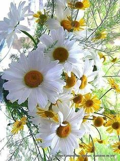 Beautiful Daisies!!