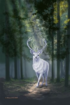 """The Assassin and the Empire by Sarah J. Maas – """"A crack in the silence—spreading wider and wider as the stag's fathomless eyes stayed on her."""""""